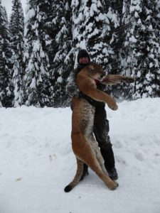 Idaho Mountain Lion Better Book Early!