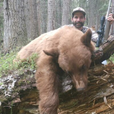 Blonde Color Phase Idaho Bear