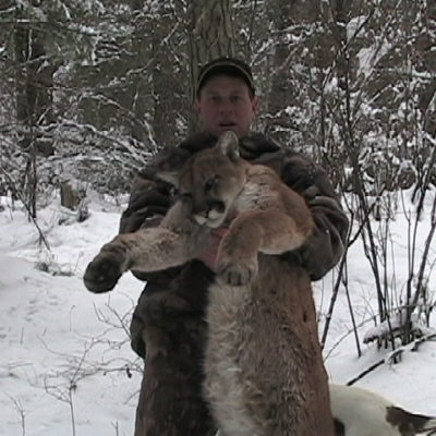 Archery cougar hunting in Idaho is exciting