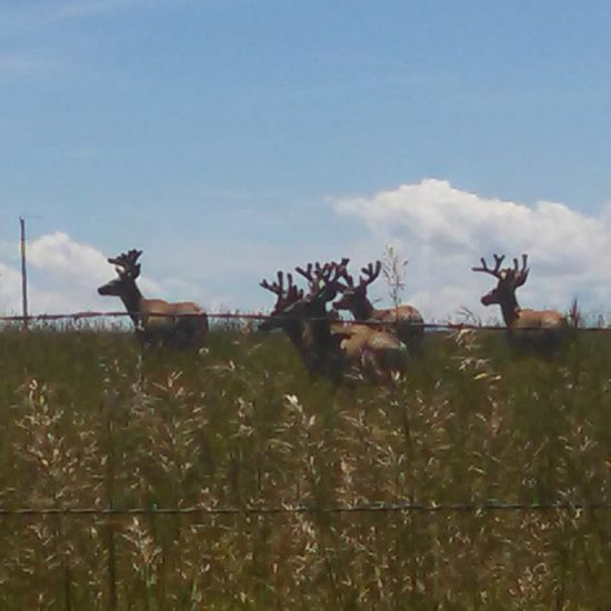 Check out lhhunting.com for Idaho Mule Deer Hunts