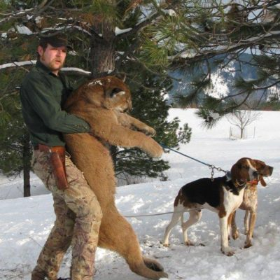 Find your mountain lion hunt at lhhunting